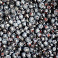 Bilberries can improve eyesight