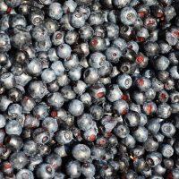 Bilberries can improve eyesight